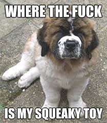 Where the fuck is my squeaky toy - The Angry puppy - quickmeme via Relatably.com
