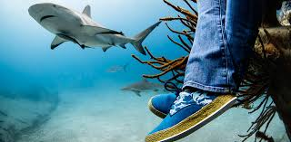 clothes for shark lovers 43242 2423 222333 11111