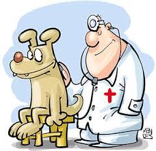 Resultado de imagem para dia do médico veterinário