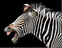 Hasil gambar untuk hewan tersenyum