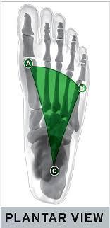 Plantar Vault: 3 <b>Arches</b> in Your <b>Feet</b>