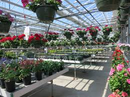 to shady hill gardens when purchasing annuals and perennials i shop local nurseries and garden centers i avoid big box stores local nurseries and garden centers provide jobs