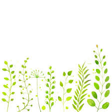 White spring background with hand painted <b>watercolor green plants</b> ...