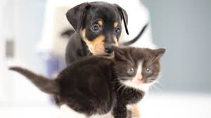 Kittens Meet <b>Puppies</b> For The First Time - YouTube