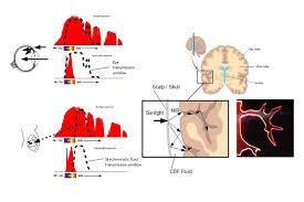3D Bio-Optical Models Reveals How the <b>Human Body</b> Uses the ...