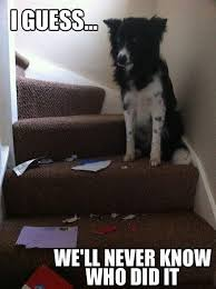 Guilty Dog: I guess, We'll Never Know Who Did It (Pic) | Daily Dawdle via Relatably.com