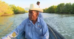 Mexican fishermen lobby for mangroves protection | Environment ...