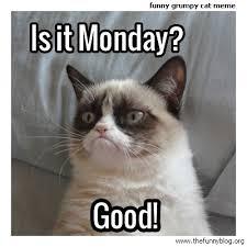 Funny Blog | All posts tagged 'funny-grumpy-cat' via Relatably.com