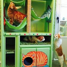 diy cat hotel cat safe furniture