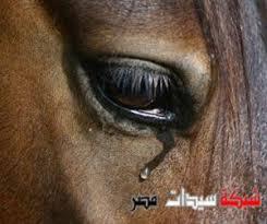 حيوانات حزينة تشعرك بلحزن images?q=tbn:ANd9GcT