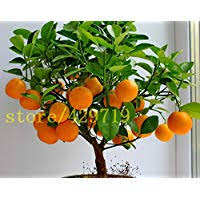 Amazon.ca Best Sellers: The most popular items in Fruit Plants ...