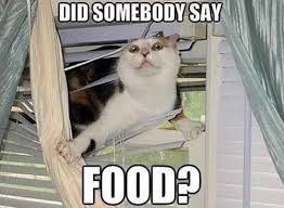 hungry-cat.jpg via Relatably.com