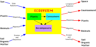 images about ecosystems  systems thinking  on pinterest        images about ecosystems  systems thinking  on pinterest   convention on biological diversity  rainforest ecosystem and marine ecosystem