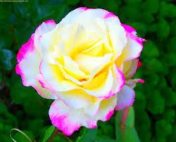 هدية.... images?q=tbn:ANd9GcT
