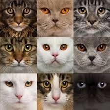 """Résultat de recherche d'images pour """"love cats"""""""