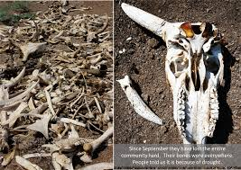 when drought hits hard a photo essay from adaptation to more about the recent livestock deaths see roger few s recent article exploring the interplay between behaviour change development