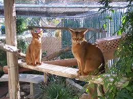outdoor cat room great to keep your cat safe but still gets fresh air i so want to build one for my kitties cat safe furniture
