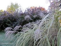 Image result for pictures of frosty gardens