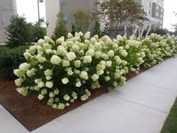 Image result for shrubs