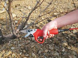 News - The FELCO 801, the ideal <b>electric pruning</b> shear for ...