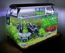 Hasil gambar untuk design aquarium