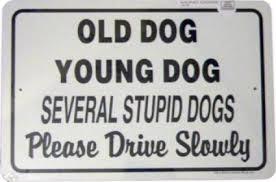Oδηγίες για σκύλους  οδηγούς...