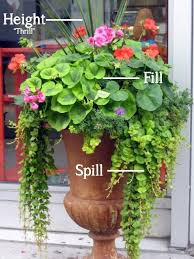 Small Picture 246 best Florida Container Gardening and other Interesting Garden