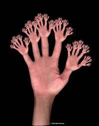 「fractal hands」の画像検索結果