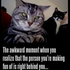 Cats on Pinterest | Kittens, Funny Cats and Meme via Relatably.com