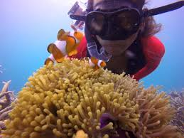 Image result for nemo perhentian kravers