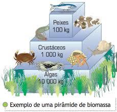 Resultado de imagem para PIRÂMIDE DE BIOMASSA