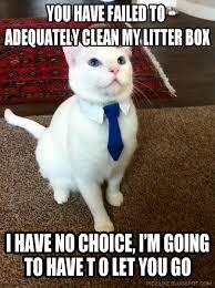 business-cat-meme-clean-litter-box-.jpg via Relatably.com