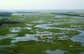 Image result for salt marshes