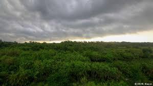Image result for সুন্দরবন