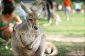 Image result for photos of melbourne zoo