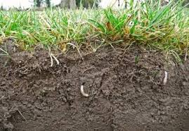 Image result for SOIL PHYSICAL FERTILITY