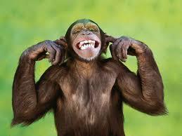 Hasil gambar untuk monyet mengetik