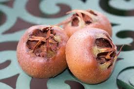 """Résultat de recherche d'images pour """"gifs de fruits de nèfles"""""""