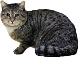 Image result for Cat