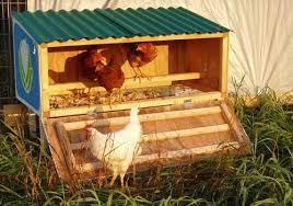 Small chicken coops   how to build a chicken coopSmall chicken coops