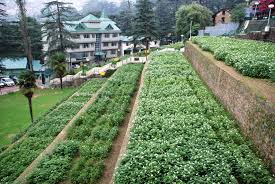 Image result for shimla potato research institute