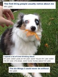 Leaf Memes. Best Collection of Funny Leaf Pictures via Relatably.com