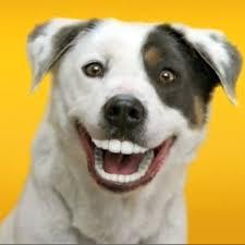 Bildresultat för happy dog'