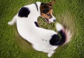 Image result for ψυχολογικη μολυνση και ο σκυλος