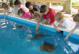 the other bounty on florida s treasure coast toronto star kids wait for a sting ray to come pet their hands in a pool