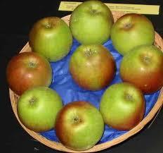 Apple Trees Laxton's Superb