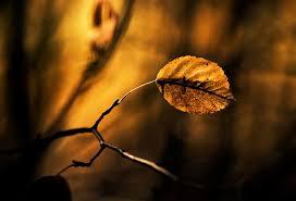 لكل محبي صور الطبيعة  اكبر تجميع لصور الطبيعة - صفحة 3 Images?q=tbn:ANd9GcTyCJM28SbhhA4xd1W5oKh5qf21Dqg5_WECbowY7UZACSTyzLTI