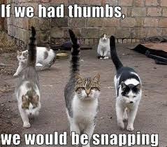 cat memes - Google Search   cats   Pinterest   Cat Memes, Meme and ... via Relatably.com