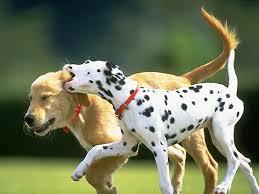 """ Tα σκυλιά βρίσκουν πάντοτε""..."