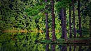 Image result for images of a forest and lake
